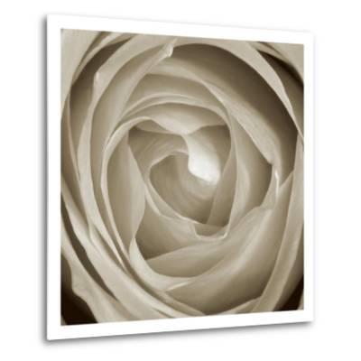 Rose Dawn II-Renee W^ Stramel-Metal Print