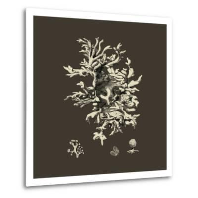 Chocolate & Tan Coral III-Vision Studio-Metal Print