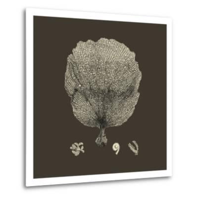 Chocolate & Tan Coral II-Vision Studio-Metal Print