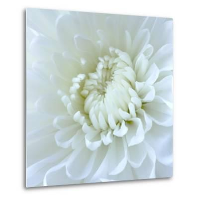 Close-up of White Flower-Clive Nichols-Metal Print