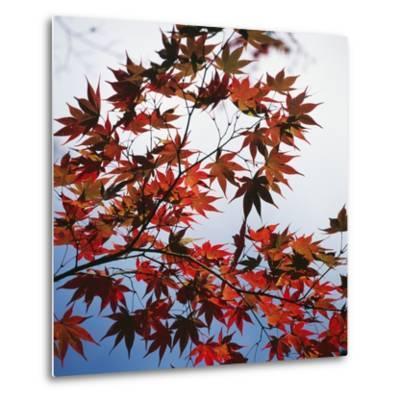 Colorful leaves-Micha Pawlitzki-Metal Print