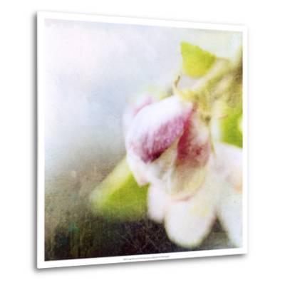 Apple Blossom II--Metal Print