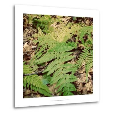 Shady Grove III-Alicia Ludwig-Metal Print