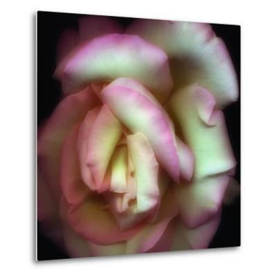 Love is a Rose-Nathan Griffith-Metal Print