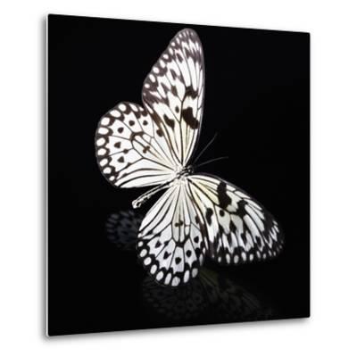 Butterfly-Sean Justice-Metal Print