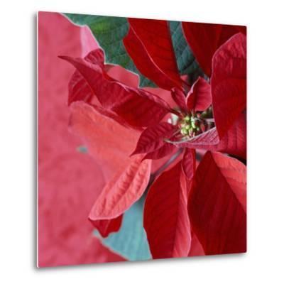 Christmas Decorations-Sean Justice-Metal Print