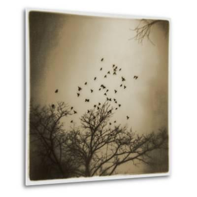 Birds and Trees, Discovery Park-Kevin Cruff-Metal Print