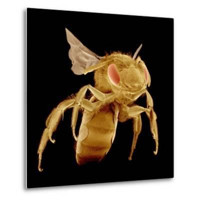 Bee-Micro Discovery-Metal Print