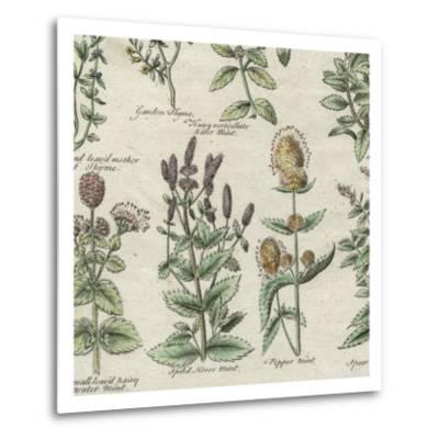 Delicate Garden IV-Vision Studio-Metal Print