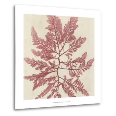 Brilliant Seaweed I--Metal Print