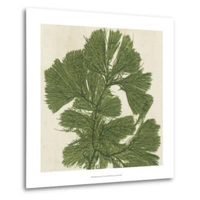 Brilliant Seaweed IV--Metal Print