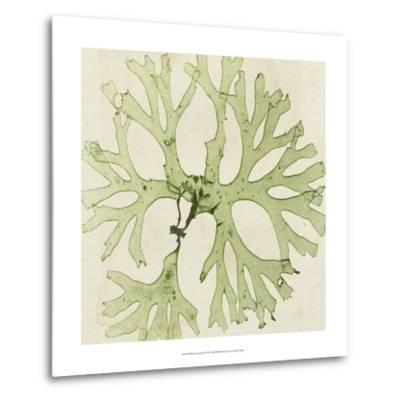 Brilliant Seaweed III--Metal Print