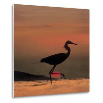 Little Egret (Egretta Garzetta) Silhouetted at Sunset, Africa-Tim Fitzharris/Minden Pictures-Metal Print