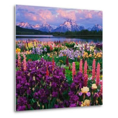 Iris and Lupine Garden and Teton Range at Oxbow Bend, Wyoming, USA-Adam Jones-Metal Print