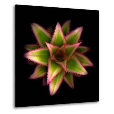 Cactus Star-Robert Cattan-Metal Print