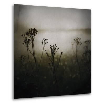 Study of Stems-Ewa Zauscinska-Metal Print