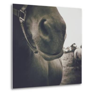 Looking a Gift Horse in the Mouth-Theo Westenberger-Metal Print