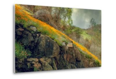 Spring in the Canyon-Vincent James-Metal Print
