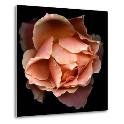 Rose Just Joey-Magda Indigo-Metal Print