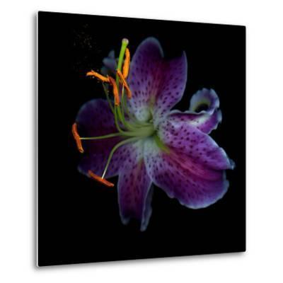 Lilly's Pollen-Magda Indigo-Metal Print