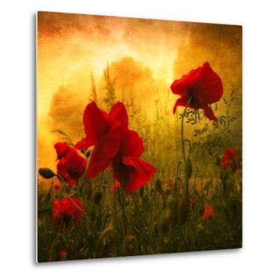 Red for Love-Philippe Sainte-Laudy-Metal Print