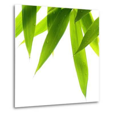 Life Is Green-Philippe Sainte-Laudy-Metal Print