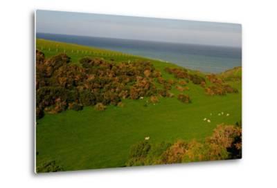 Sheep and the Rolling Hills to the Ocean, Otago, South Island, New Zealand, Pacific-Bhaskar Krishnamurthy-Metal Print