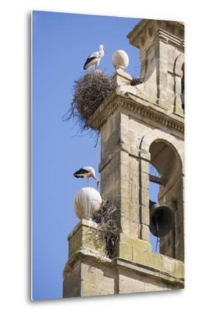 Two European White Storks and their Nests on Convent Bell Tower, Santo Domingo, La Rioja, Spain-Nick Servian-Metal Print