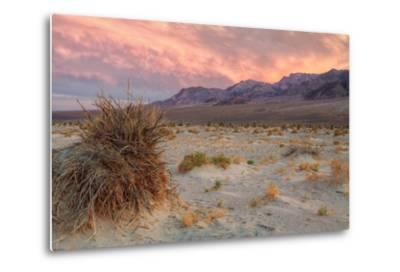Sunset at Devil's Cornfield-Vincent James-Metal Print