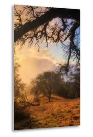 Light and the Back Woods-Vincent James-Metal Print