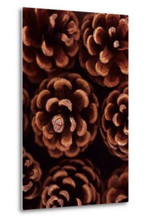 Pine Cones-Den Reader-Metal Print