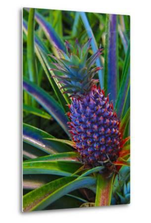 Pineapple, Melanesia, Fiji-Douglas Peebles-Metal Print