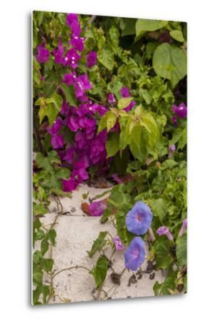 Morning Glory and Bougainvillea Flowers, Princess Cays, Eleuthera, Bahamas-Lisa S^ Engelbrecht-Metal Print