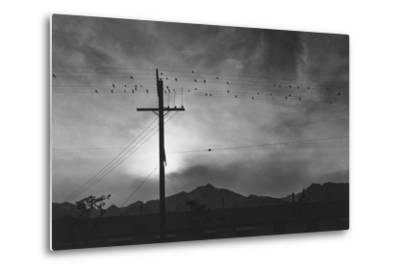 Birds on Wire, Evening, Manzanar Relocation Center', 1943 by Ansel Adams--Metal Print