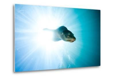A Sea Lion Descends in a Beam of Light-Ben Horton-Metal Print