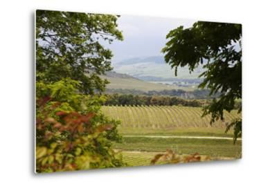 Vineyard and Olive Grove on Rolling Hillside, Tuscany, Italy-Terry Eggers-Metal Print