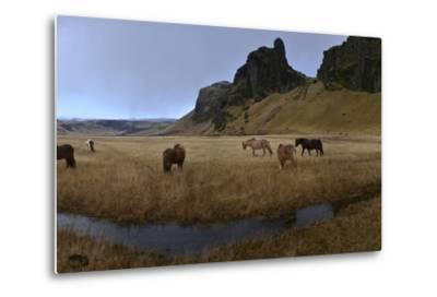 Icelandic Horses in a Pasture-Raul Touzon-Metal Print