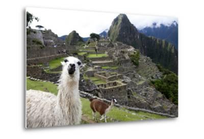 The Ruins At Machu Picchu and a Couple of Llamas-Kent Kobersteen-Metal Print