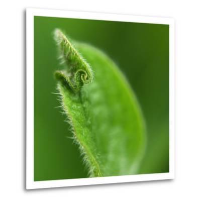 Leaf Curl-Karen Ussery-Metal Print