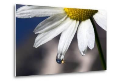 A Sparkle in a Drop of Water on a Daisy Petal-Robbie George-Metal Print