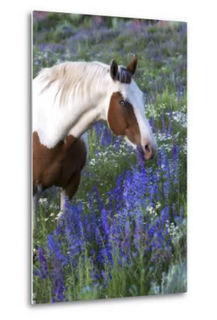 Portrait of a Horse in a Field of Purple Wildflowers-Robbie George-Metal Print