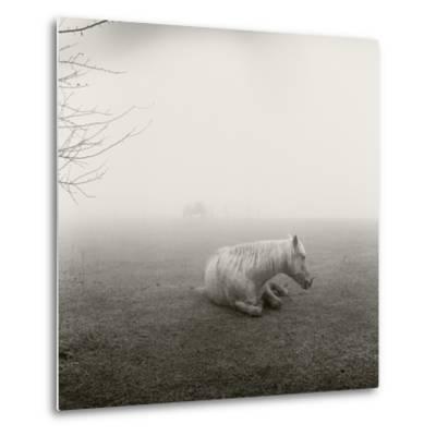 A Horse Resting in Heavy Fog-Stephen Alvarez-Metal Print