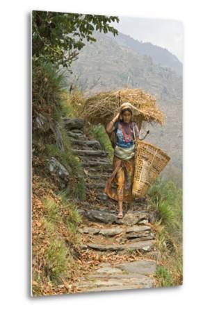 Local Woman Follows a Trail Carrying a Basket Called a Doko, Annapurna, Nepal-David Noyes-Metal Print