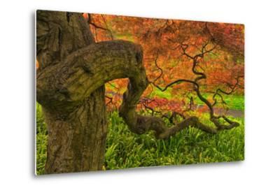 Close-Up Japanese Maple Tree, Winterthur Gardens, Delaware, USA--Metal Print