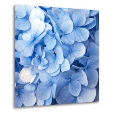 Blue Flowers--Metal Print