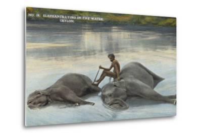 Elephants Lying in the Water, Ceylon--Metal Print
