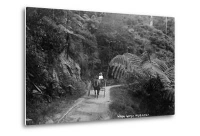 Waipu Gorge--Metal Print