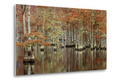USA, Georgia, Cypress Swamp with Fall Reflections-Joanne Wells-Metal Print