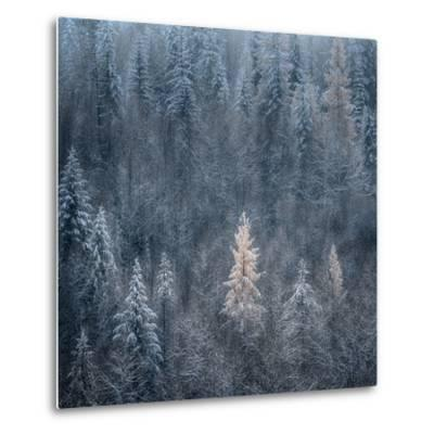 First Snow-Ursula Abresch-Metal Print