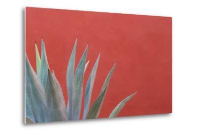 Mexico, San Miguel De Allende. Agave Plant Next to Colorful Wall-Jaynes Gallery-Metal Print